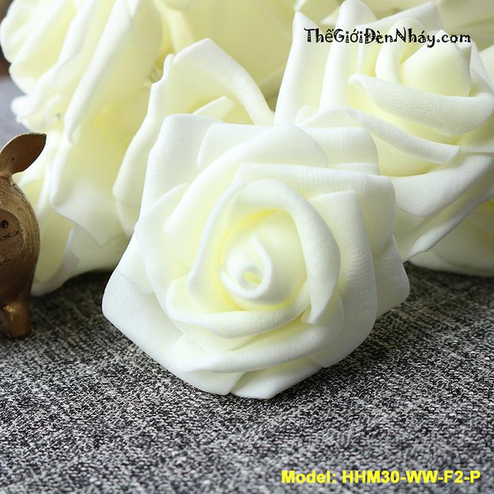 hoa hồng pe