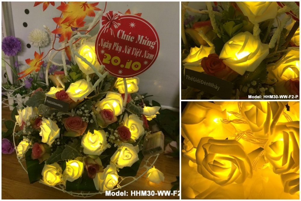Lãng hoa hồng phát sáng ngày 20.10